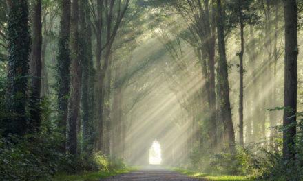 Koleksi Foto Matahari Terbit Di Tengah Hutan yang Indah