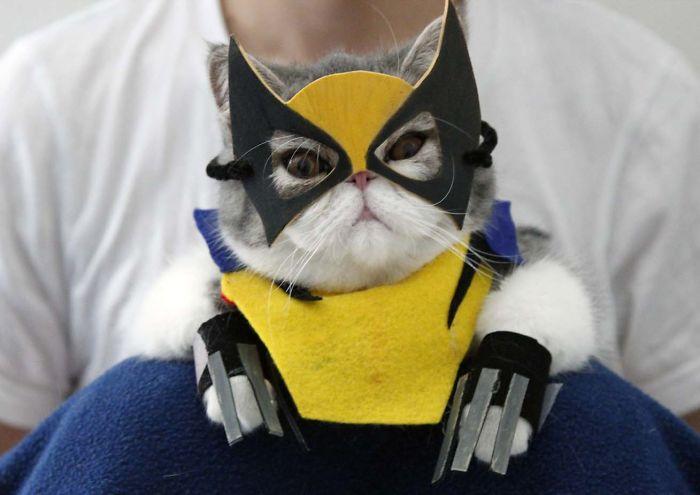 Kostum Unik Untuk Kucing Peliharaan Anda !