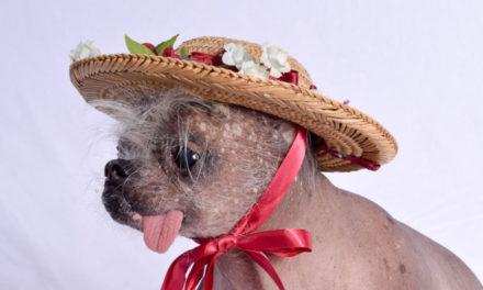 Saya Memotret Anjing Peliharaan Ku dengan Kostum yang Unik