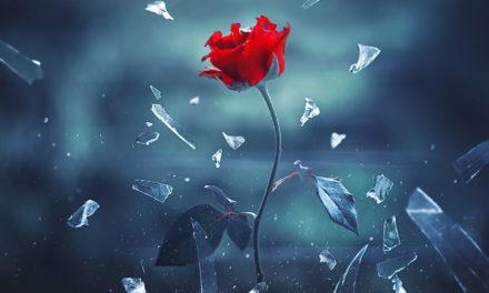 Saya Menggunakan Bunga Untuk Menciptakan Gambar yang Menakjubkan