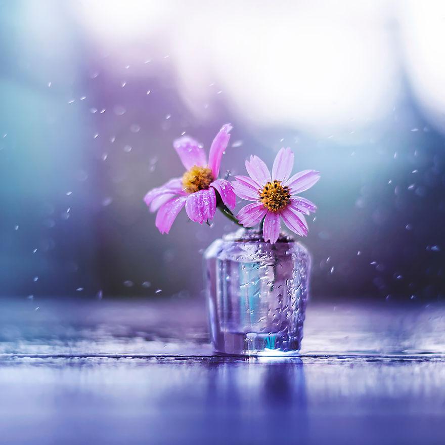 660 Gambar Bunga Keren Untuk Instagram Terbaik