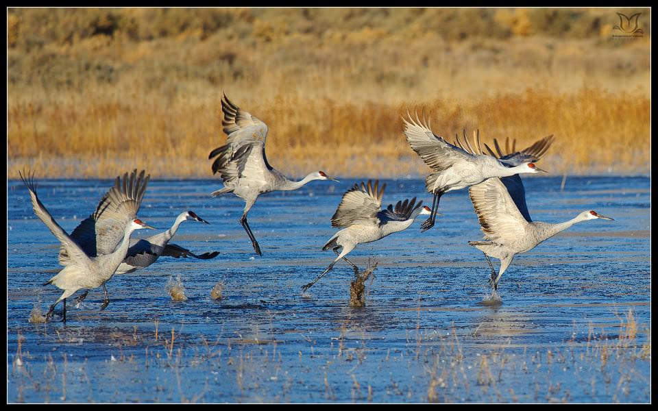 Lensa Tele Nikon yang Ampuh untuk Wildlife Photography