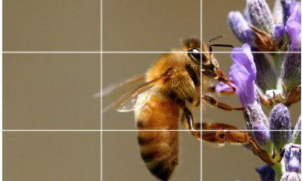 Memahami Konsep Rule of Thirds Dalam Fotografi